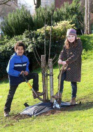 Hollingdean tree planting
